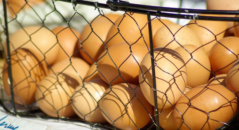 Na co zwracać uwagę kupując jajka?